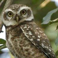 How the spotted owl can save us